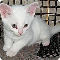 Adopt A Pet :: Finn & Jake - Acme, PA