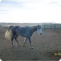 Adopt A Pet :: Moon - Pueblo, CO