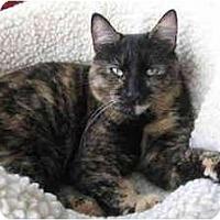 Adopt A Pet :: Priscilla - Portland, OR