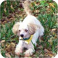 Adopt A Pet :: Missy - Tallahassee, FL