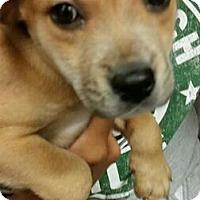 Adopt A Pet :: Chelsea - Phoenix, AZ