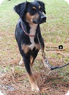 Spaniel (Unknown Type) Mix Dog for adoption in Manhasset, New York - Maddy