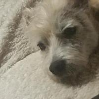 Adopt A Pet :: Elmo - Grantville, PA