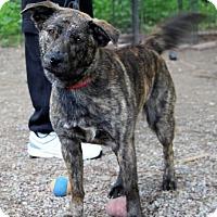 Adopt A Pet :: Fantasia - Avon, NY