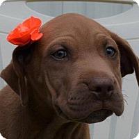 Adopt A Pet :: Fable - Allentown, NJ