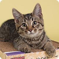 Adopt A Pet :: Platypus - Wilmington, DE