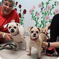 Adopt A Pet :: Homer & Millie - Elyria, OH