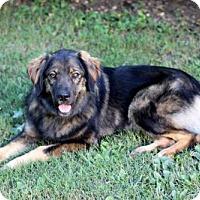 Adopt A Pet :: SHELBY - Salem, NH