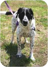 Labrador Retriever/Pointer Mix Dog for adoption in Walker, Michigan - Reggie