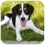 Photo 4 - Hound (Unknown Type)/Labrador Retriever Mix Dog for adoption in Latrobe, Pennsylvania - Kirby