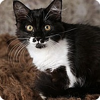 Adopt A Pet :: Emmy Lou - Eagan, MN