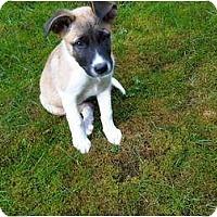 Adopt A Pet :: Dip - Pending - Vancouver, BC