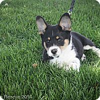 Adopt A Pet :: Liberty - Broomfield, CO