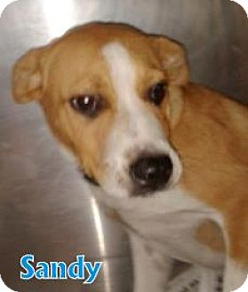 Hound (Unknown Type) Mix Dog for adoption in Walden, New York - Sandy