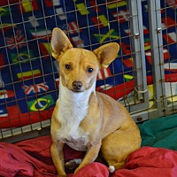 Terrier (Unknown Type, Small) Mix Puppy for adoption in Lodi, California - Jase