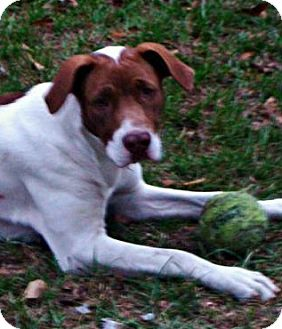 Pointer Mix Dog for adoption in Jesup, Georgia - Naya