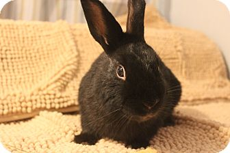 American Mix for adoption in Hillside, New Jersey - Bart