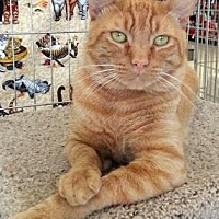 Adopt A Pet :: George - Encinitas, CA