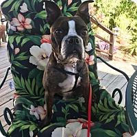 Adopt A Pet :: Aspen - Weatherford, TX