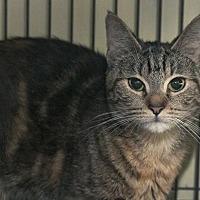 Adopt A Pet :: Isadora - Grand Ledge, MI