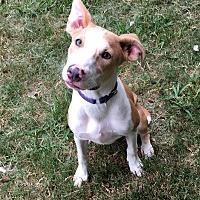 Adopt A Pet :: MaeMae - Sacramento, CA