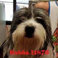 Adopt A Pet :: Bubba - Manassas, VA