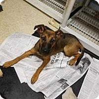 Adopt A Pet :: Wendy - Harmony, Glocester, RI