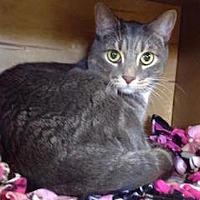 Adopt A Pet :: Mukluks - Holland, MI