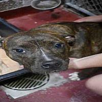Adopt A Pet :: LADY KATE - Atlanta, GA