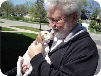 Pointer/Pointer Mix Puppy for adoption in Wood Dale, Illinois - Marigold- ADOPTION PENDING!!