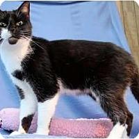 Adopt A Pet :: Groucho - McKinney, TX