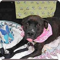 Adopt A Pet :: Pretty Betty - Kingwood, TX