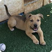 Adopt A Pet :: Banjo - Tustin, CA