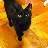 Adopt A Pet :: Griffin - Brooklyn, NY