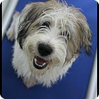 Adopt A Pet :: Jasper - Rockwall, TX