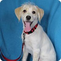 Adopt A Pet :: Parker - Minneapolis, MN