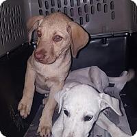 Adopt A Pet :: Miu Miu - Freeport, ME