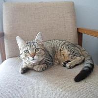 Adopt A Pet :: Leia - Montello, WI