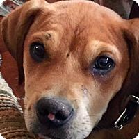 Adopt A Pet :: Webster - Billerica, MA