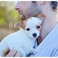 Adopt A Pet :: Birdie Litter girls - Seattle c/o Kingston 98346/ Washington State, WA