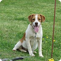 Adopt A Pet :: RHETTA - Newburgh, NY