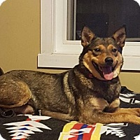 Adopt A Pet :: Bellie - Regina, SK