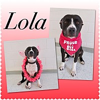 Adopt A Pet :: Lola - Pawsitive Direction - Loxahatchee, FL