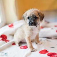 Adopt A Pet :: Buttons - Eugene, OR
