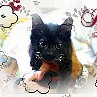 Adopt A Pet :: Jo - Washington, DC