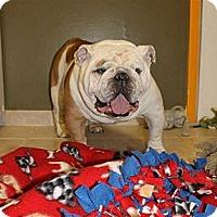 Adopt A Pet :: Dewey - Winder, GA