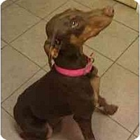 Adopt A Pet :: Lilly--adopted!! - New Richmond, OH