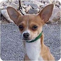 Adopt A Pet :: Pogo - Las Vegas, NV