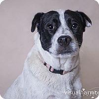 Adopt A Pet :: Shirley - Phoenix, AZ
