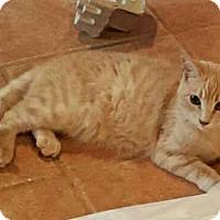 Adopt A Pet :: Rowdy - Colorado Springs, CO